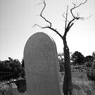 Tombstone Tree by Jon  Johnson