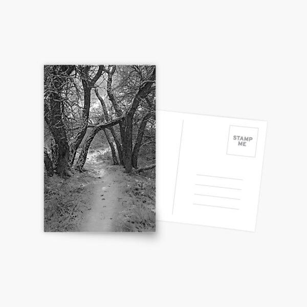 Secret Path Postcard