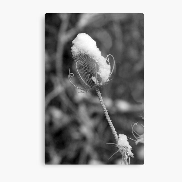 Snowflower Metal Print