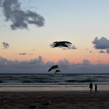 Seagulls at sunset by AscensionEd