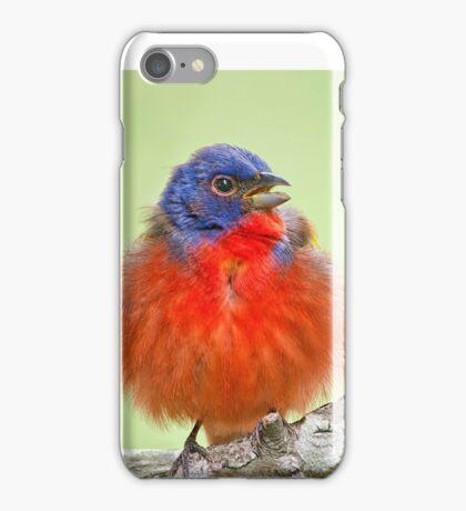 Bunting Portrait iPhone Case/Skin