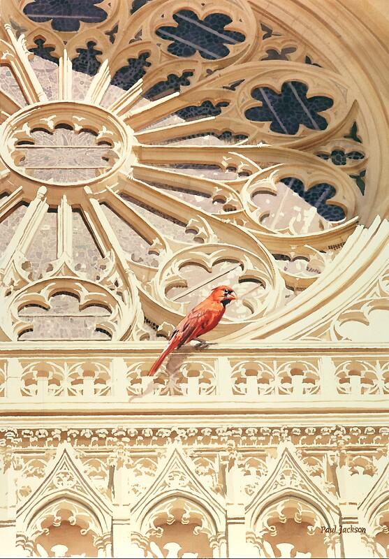 Quot Quot The Cardinal Quot Watercolor Quot By Paul Jackson Redbubble
