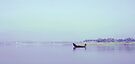 Fisherman's Dawn - A view from Dreamworld by Prasad