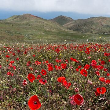 Poppies field and hilly background by amovitania