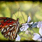 Butterfly  by Jonicool