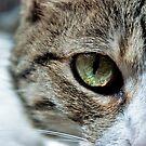 Cat Eye Macro by Gypsykiss