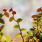 Little Vine by CarolM