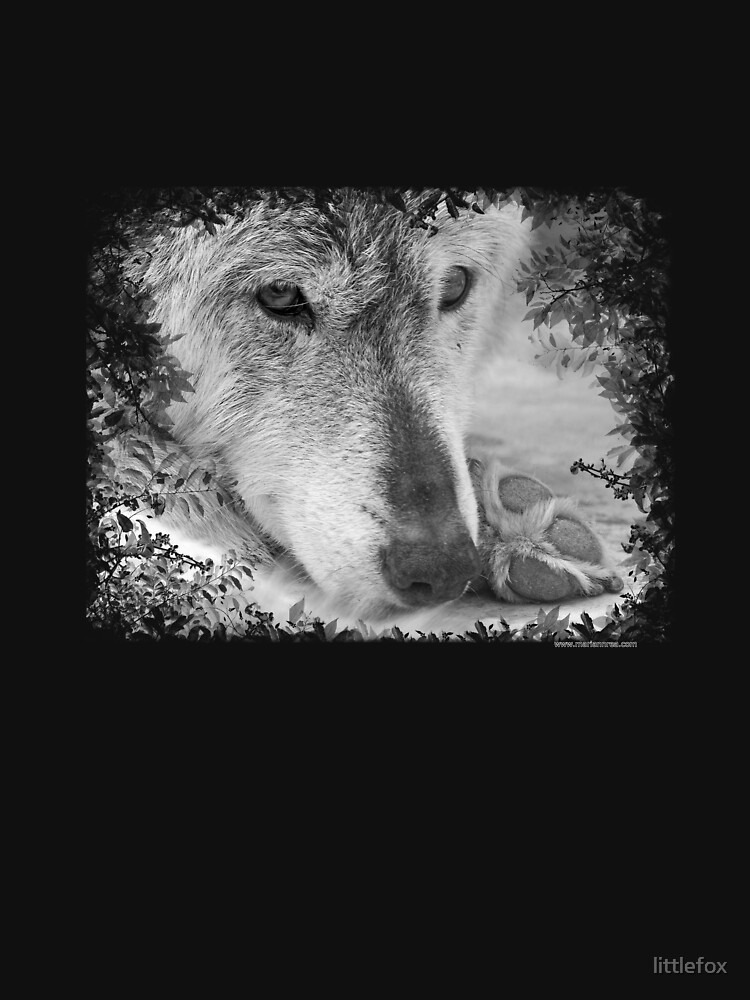 Wolf eyes by littlefox