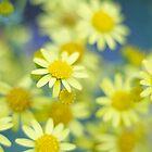 Mellow Yellow Daisies by heidiannemorris