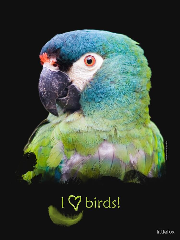 Parrot by littlefox