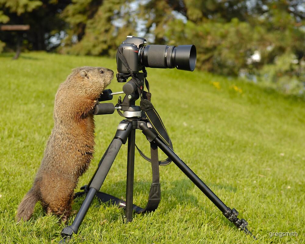 groundhog photography by gregsmith