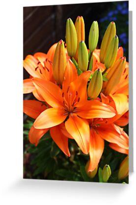 Orange Blast by SidelineArt