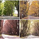 Seasons of The Avenue - Bacchus Marsh by Anne van Alkemade