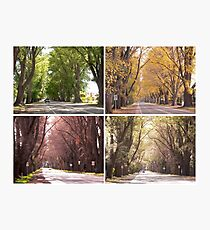 Seasons of The Avenue - Bacchus Marsh Photographic Print