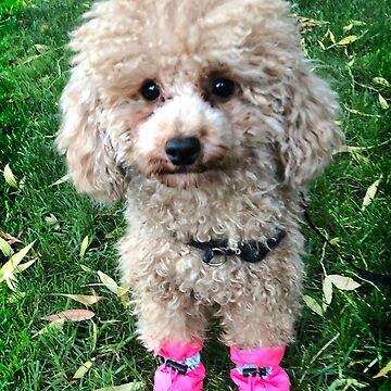 Raffies Pink Booties by rozmcq