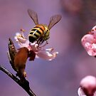 To Bee or Not to Bee by Kym Howard