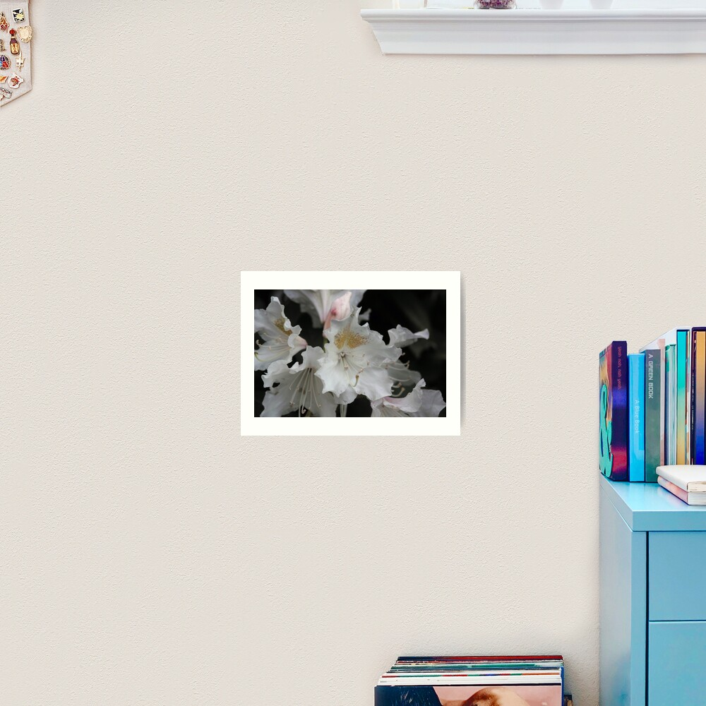 White and Gold Azaleas Art Print
