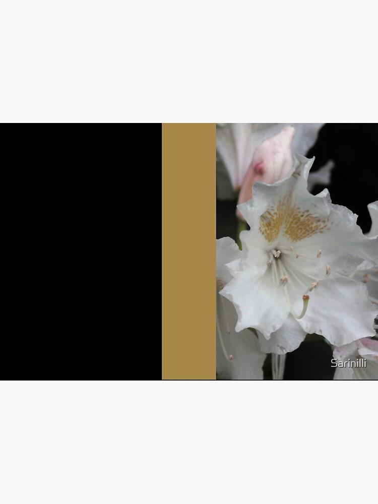 White and Gold Azaleas by Sarinilli