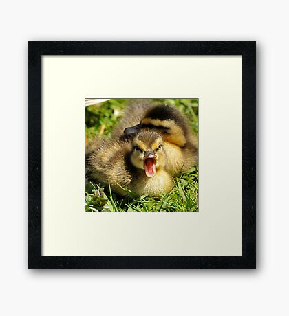 Do You Mind, I'm Trying to Take a Nap! Framed Print