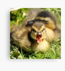 Do You Mind, I'm Trying to Take a Nap! Metal Print
