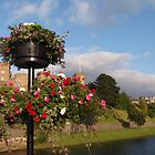 Flowers on a Lamp Post by kalaryder