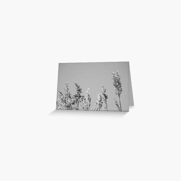 Black&White reed Greeting Card