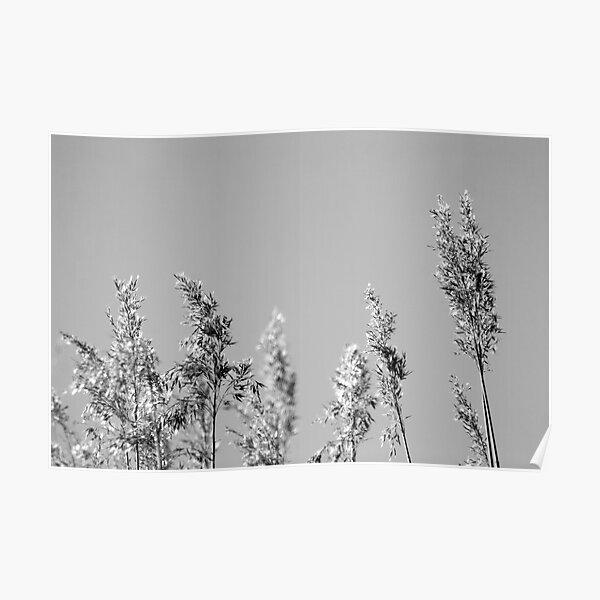 Black&White reed Poster