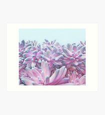 Sweet Succulents Art Print
