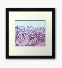 Sweet Succulents Framed Print