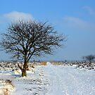 Fochteloerveen in Winter by ienemien