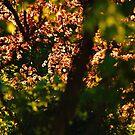 Lounge Trees One by Nik Watt