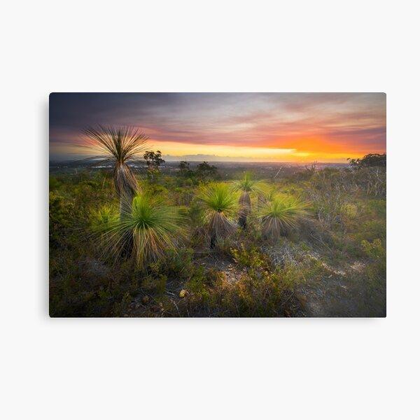 Xanthorrhoea sunset Metal Print