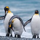 Three King Penguins - South Georgia by Steve Bulford