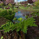 Japanese Garden Plants, Mayne Island, BC by toby snelgrove  IPA