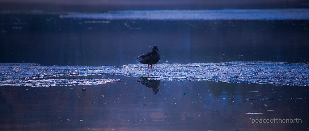 Duck on Ice by peaceofthenorth