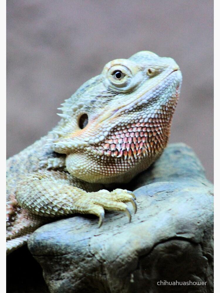 Iguana by chihuahuashower