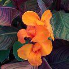 Orange Dazzler by Lyle Hatch