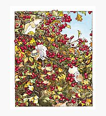 The Blackthorn Bush Photographic Print