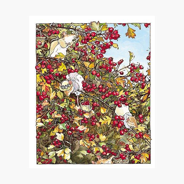 The Blackthorn Bush Photographic Print