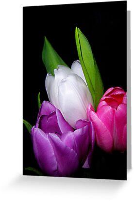 Tulips in Pastel by DottieDees