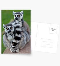 No Scarf Required... (Ring-Tailed Lemurs) Postcards