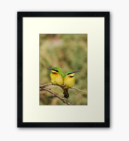 Unity (Little Bee Eaters) Framed Print