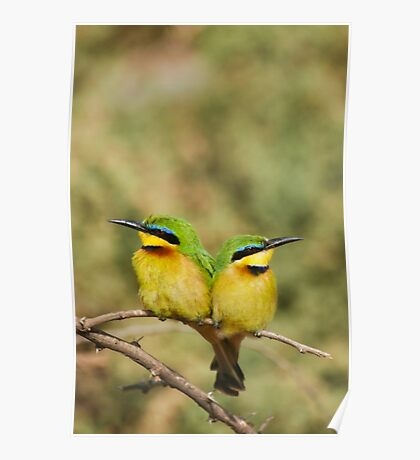 Unity (Little Bee Eaters) Poster