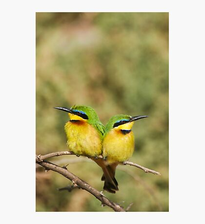 Unity (Little Bee Eaters) Photographic Print