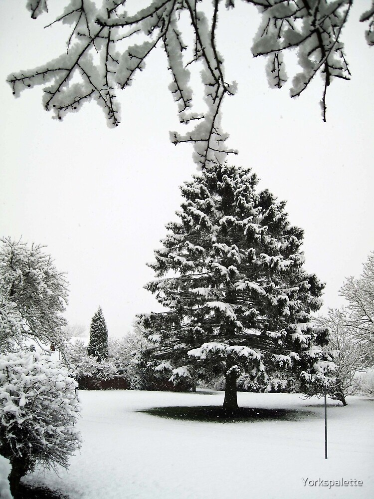 The fir tree by Yorkspalette