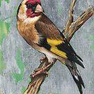 Bird 1 - European Goldfinch by Joe Helms
