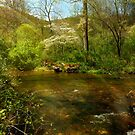 North Carolina Mountain Spring by Tibby Steedly