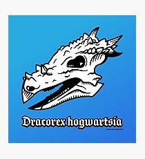 Dracorex hogwartsia skull! Photographic Print