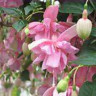 """""""Pink Galore"""" Fuchsia by Pat Yager"""
