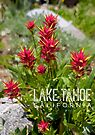 Paintbrush at Lake Tahoe, CA by Jared Manninen